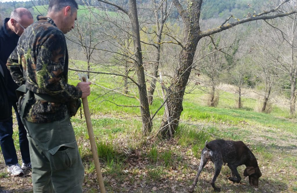 truffle hunter Assisi