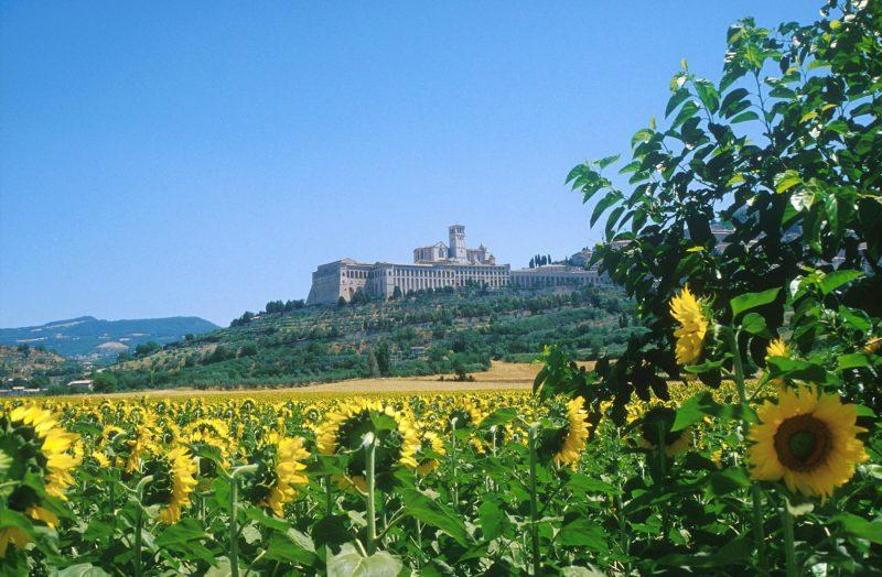 Assisi und Sonnenblumen