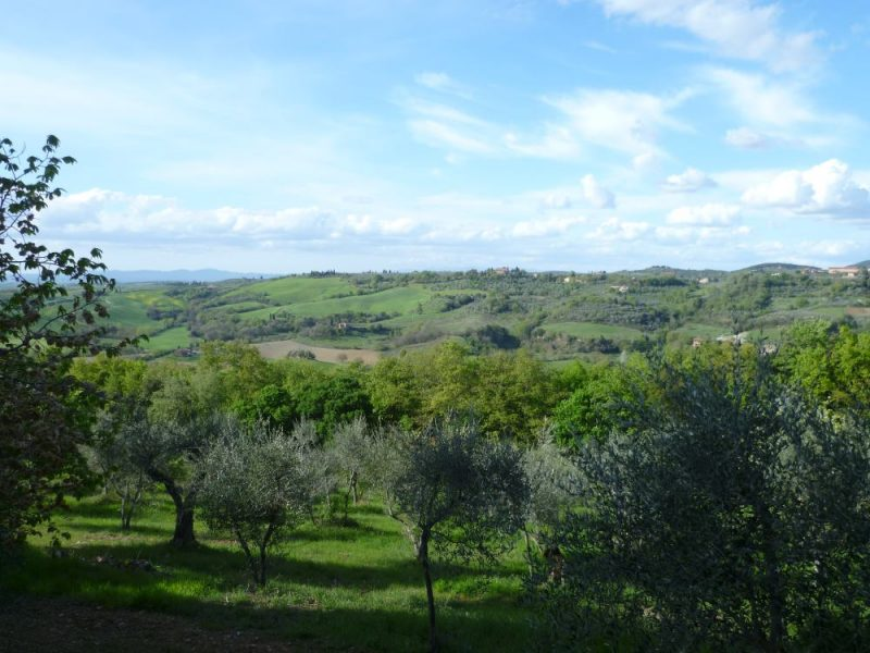 olive grove Etruscan cycling tour
