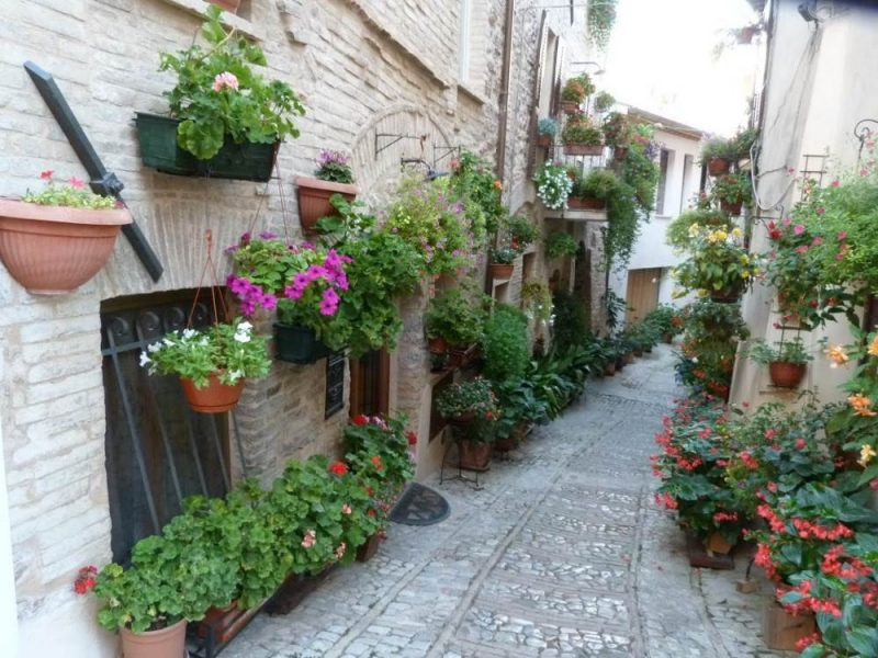 spello flowers