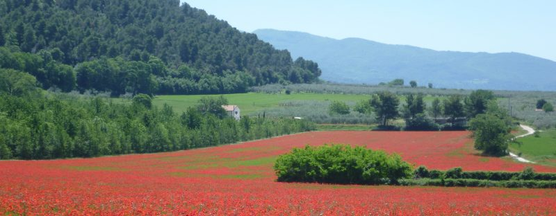 Umbrian landscape with poppies