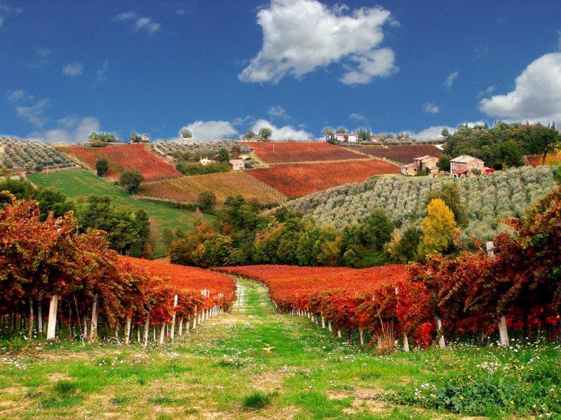 walking vineyards