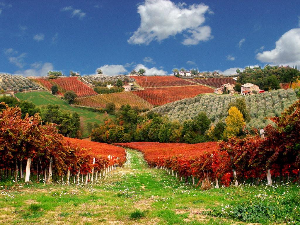 Camminare tra i vigneti di Montefalco e degustazione di vini - Meravigliosa  Umbria
