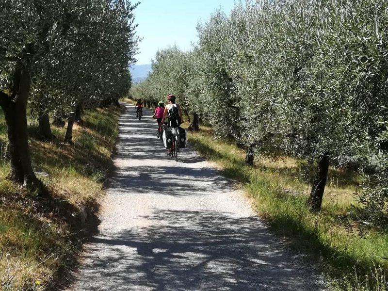 pedalando lungo la via degli olivi Assisi-Spello