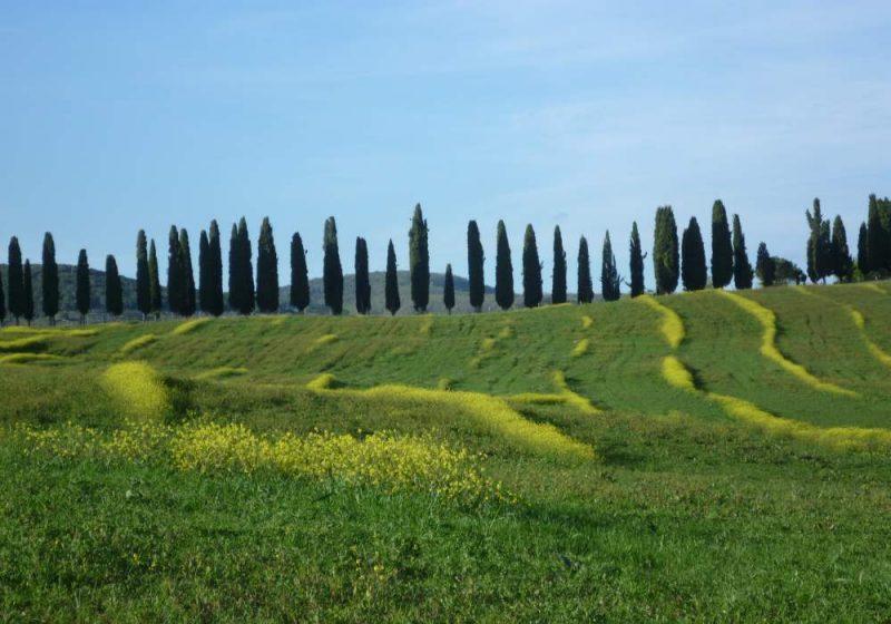 Landschap in Toscana