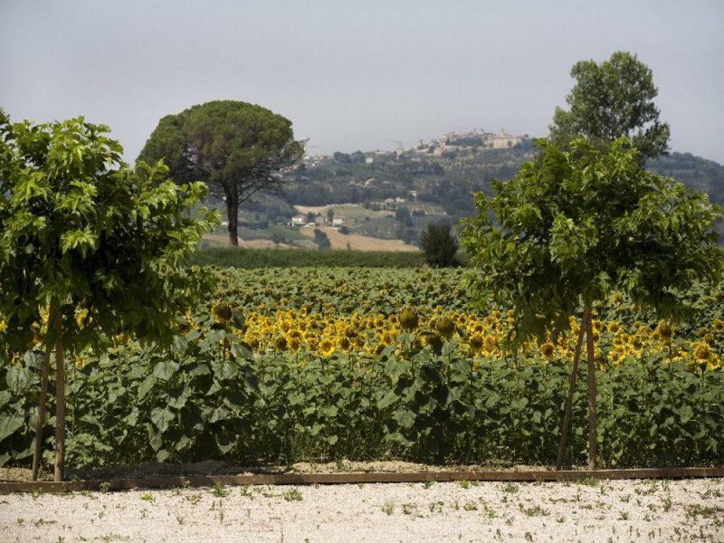 Sicht auf Montefalco