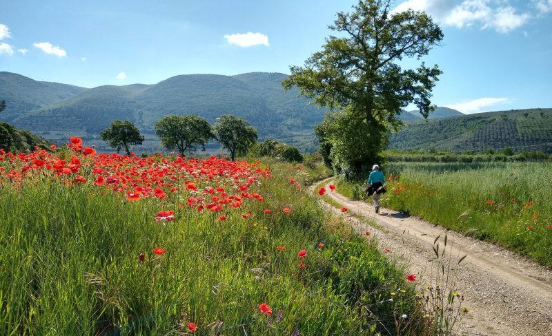walker in umbrian landscape