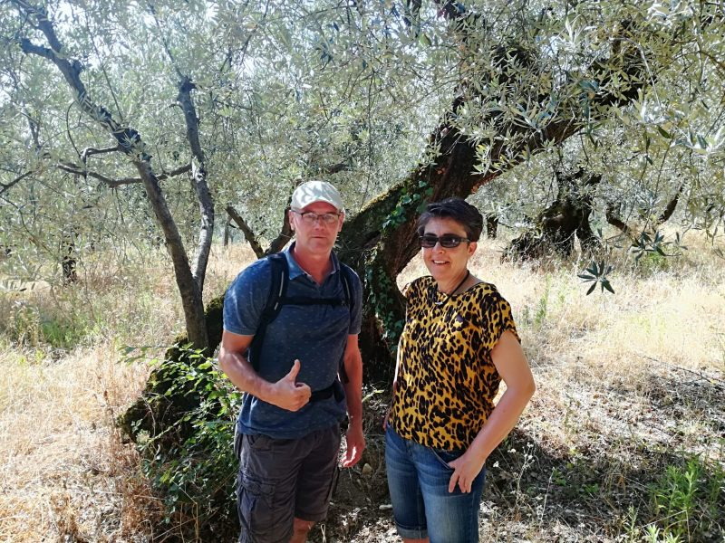 walking olive groves and vineyards Montefalco